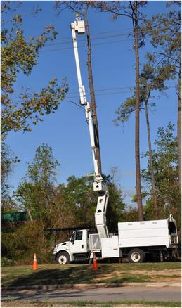 Tree Services Randolph NJ