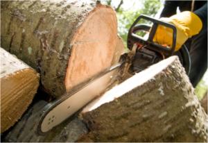 professional trimming tree