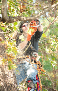 girl doing tree trimming