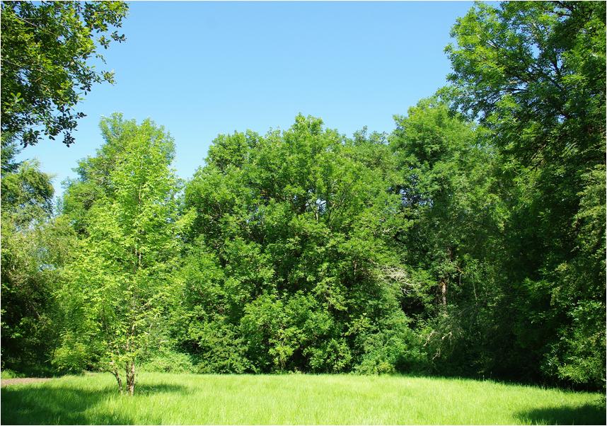 Tree Trimming Randolph NJ Tree Service